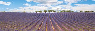 Avignon-Provence